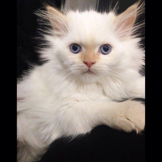 Instagram-PatMcGrath-kitten