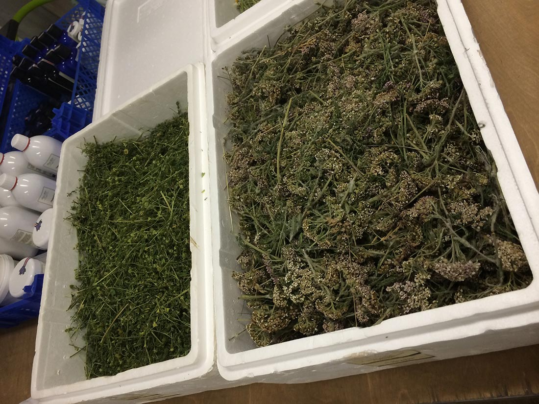 iceland-purity-herbs-wild-herbs