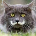 cat moustache, hamilton