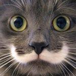hamilton, cat, hipster cat