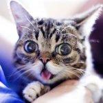 lil bib, cat, cute cat