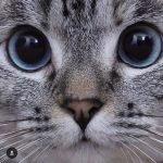 cat, eyes, cat eyes, pretty kitty