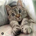nala cat, cute cat