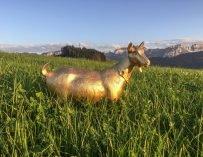 Где козы зимуют: все, что надо знать о марке LediBelle. Репортаж из Альп